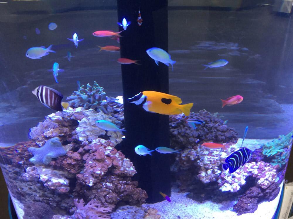 熱帯魚の仲間たち